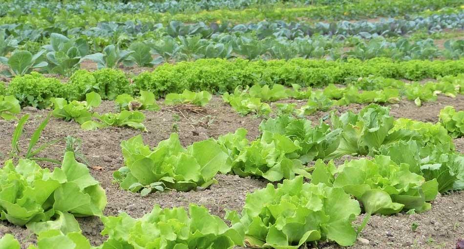 近郊農園のオードブル - 近郊農園のオードブル